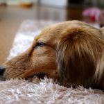 ピローパッドは地味に睡眠と生活を捗らせる